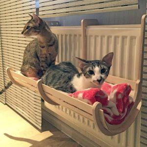 Макет подвесной кровати для кошек