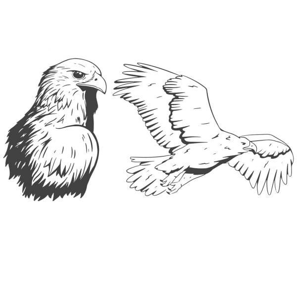 Орёл в векторе
