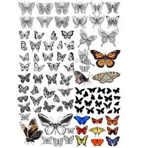 Бабочки в наборе