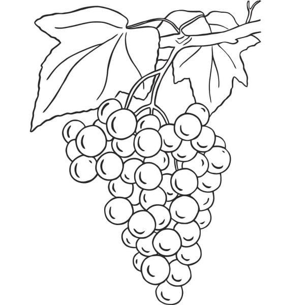 Виноград рисунок гравировка